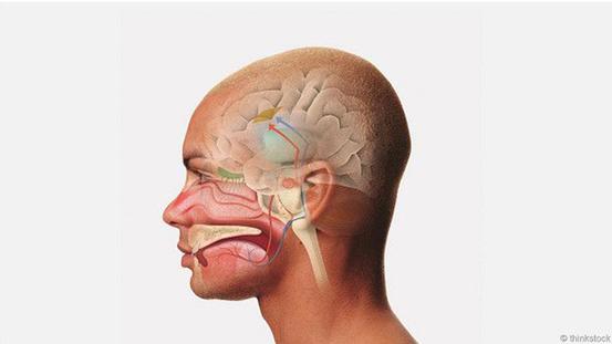 Дженнифер Плазник: Запахи чувствует не только нос, но и тело