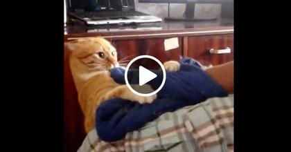 Самый мстительный в мире кот
